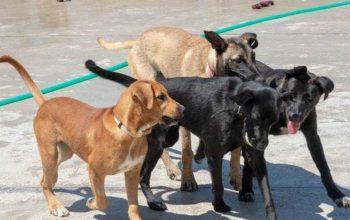 Adopt a Dog from Spain