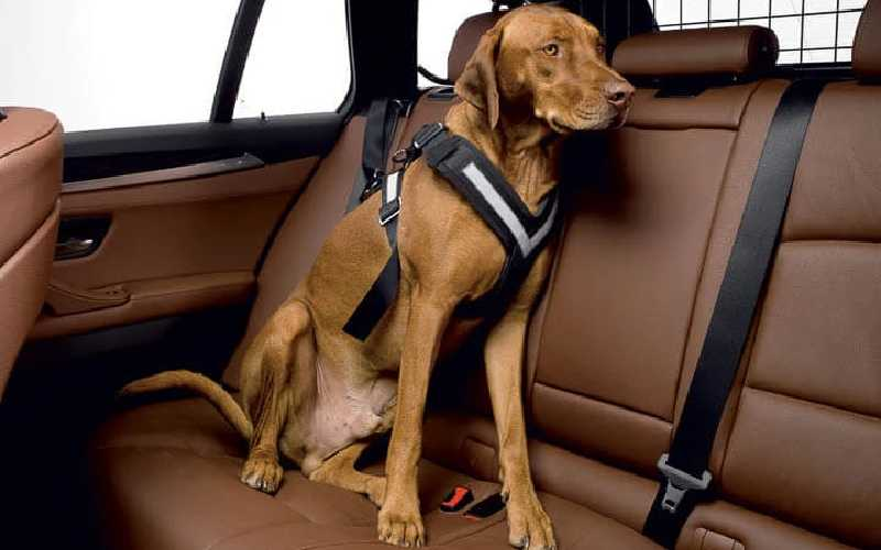 Best Dog Car Harness