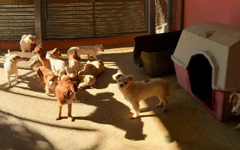 Dog Rescue Malaga