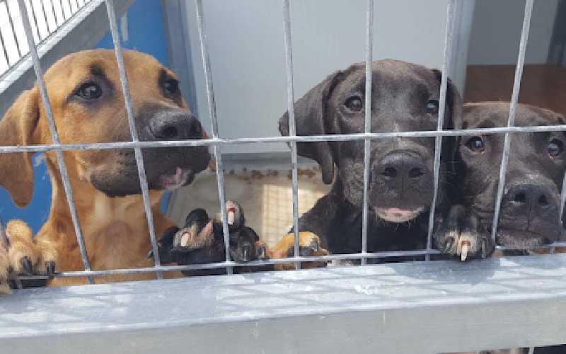 Spanish Dog Rescue Centres